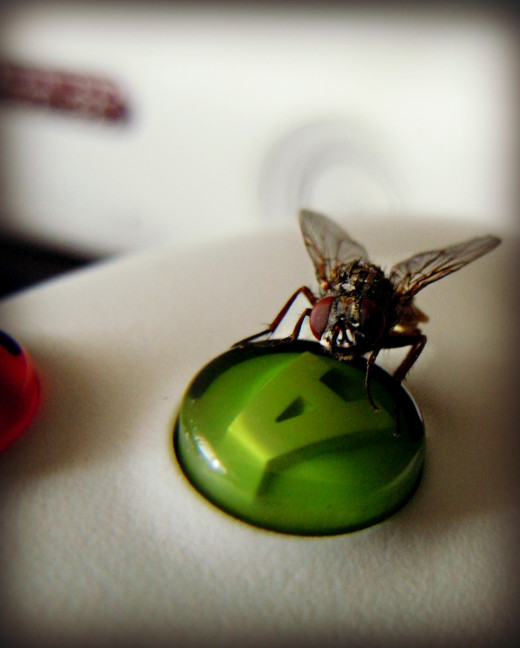 While everyone is asleep in the household, this housefly takes over the Xbox!  He knows how to play his game.