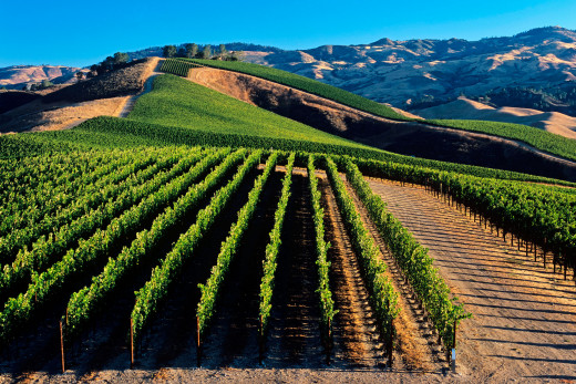 The rolling vineyards of Lake County, California. Organic or not, one cannot deny the beauty of these vineyards.