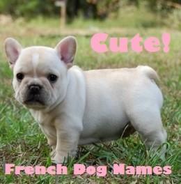 Cute Girl Dog Names For Bulldogs