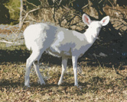 Legend of the White Deer not a Myth