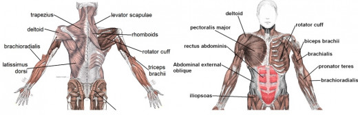Train Upper Body Muscles