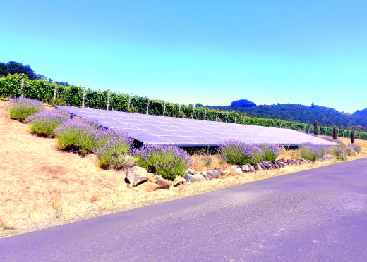 The solar panels that help keep Left Coast sustainable in its wine-making.