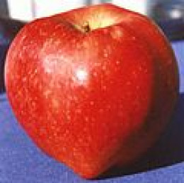 Red delicious apple!