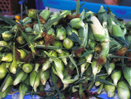 Sweet corn ready for purchase