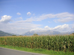 Field, corn, Liechtenstein, Mountains, Alps, Vaduz, sky, clouds, landscape. This is the type of corn often genetically modified. In Europe, they manage to survive without GMO foods