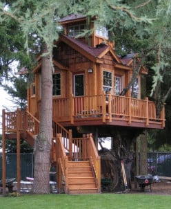 Tree Houses Are The future