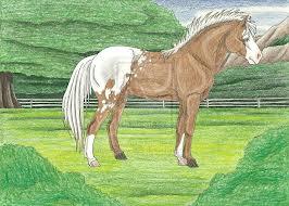 Horses appreciate eyebright compresses too!