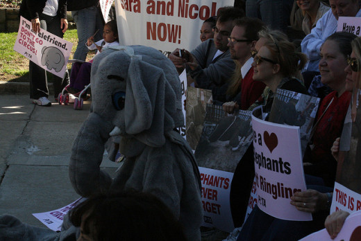 Protesting going strong in many cities. There was also a large protest in NYC 2013 on PETA.