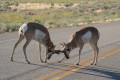 Give Wildlife A Break: How To Avoid A Collision With Wild Animals