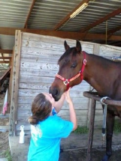 Owning A Horse Can Be A Wonderful Experience