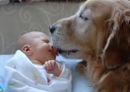 Sweet Display of Affection from this Beautiful Dog!