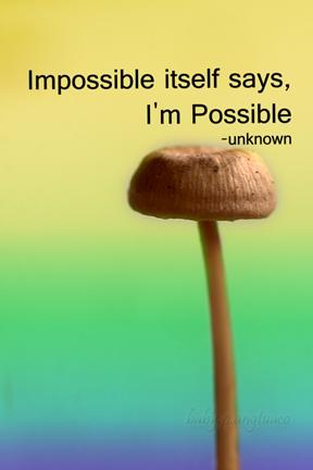 ordinary mushroom photo converted into a photocard