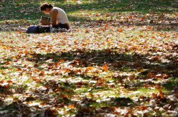 In England, girl sitting amongst the Autumn leaves as she reads.