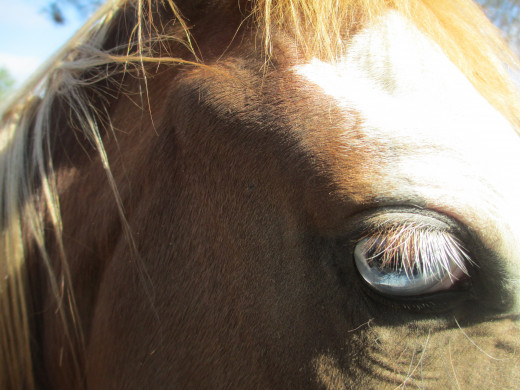 Canon shot. Notice the clarity! The eyelashes come through nice!