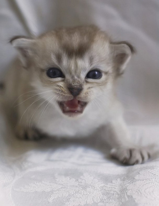 Cats develop an attitude early in life!