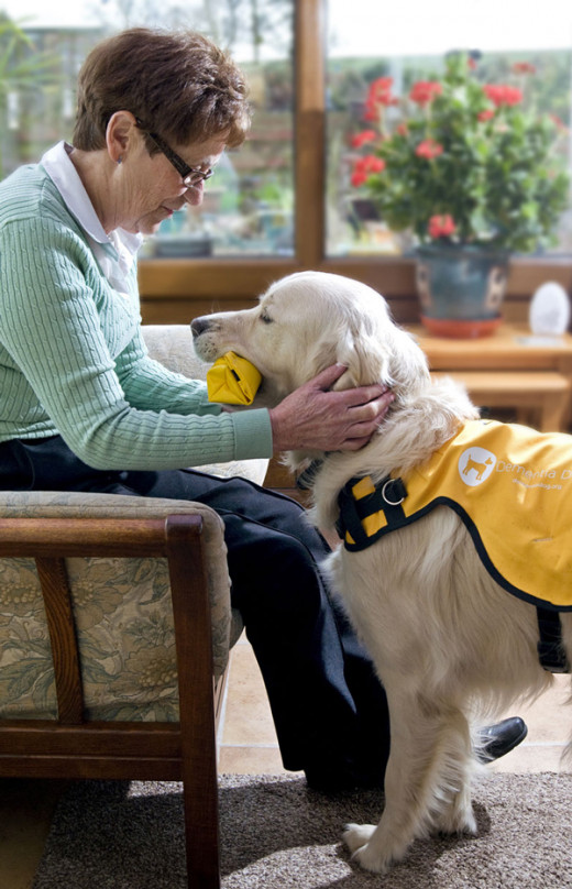 "Kaspa the first ""dementia dog"""