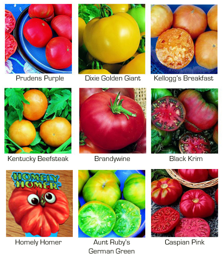Here we have delicious Heirloom Tomatoes in the tomato photos here.