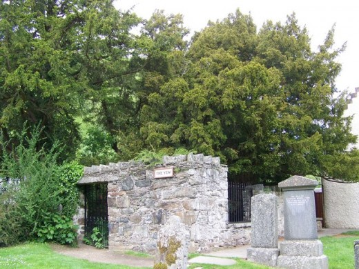 The historical and mystical Fortingall Yew of Perthshire.