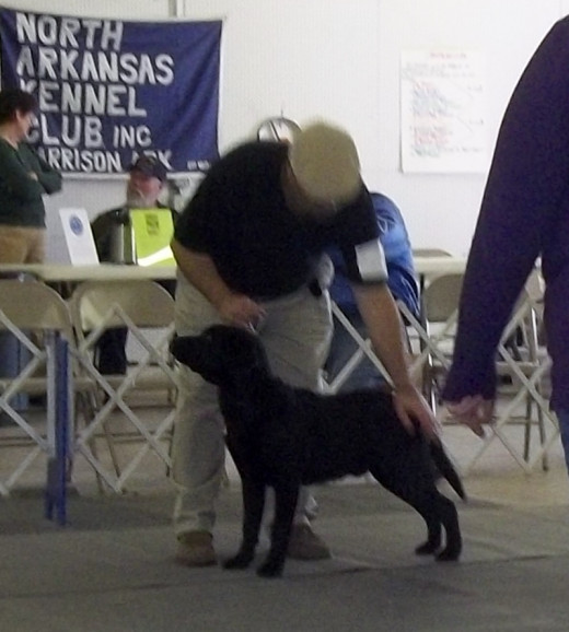 January 2012 Harrison, Ark Best of Breed at 6 months