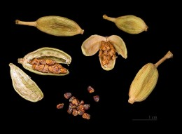 Cardamom lasts a very long time if you buy it still in the capsules. Open the capsules by hitting them with the broad side of a knife.