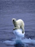 Global Warming:  Is There Any Hope?