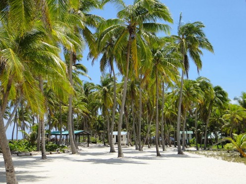 White sands, blue skies and coconut palms . . . tropical paradise.