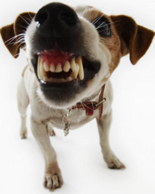 Beware:  Stray Dog