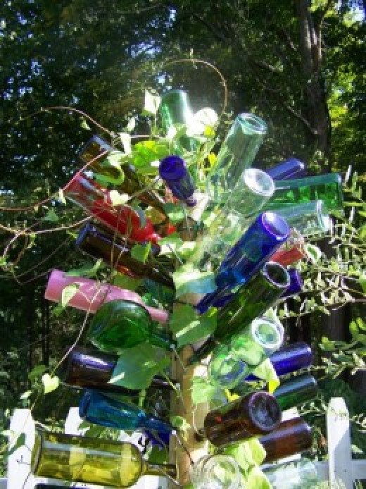 Morning Glory In Bottle Tree