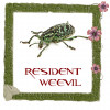 Resident Weevil profile image
