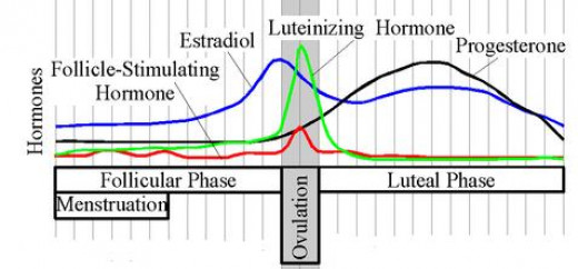 The levels of progesterone during a 28-day cycle.