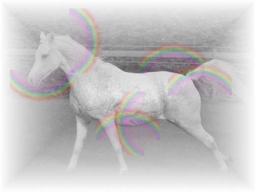 Many encounters with ghost or spirit horses seem to involve pale or white coloured animals.