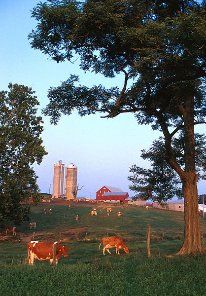 How bucolic. A small dairy farm in western Maryland.