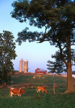 How bucolic. A small dairy farm in western Maryland.