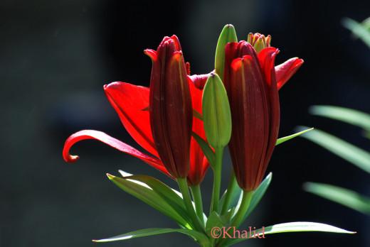 Red attire