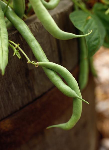 Healthy Green Beans