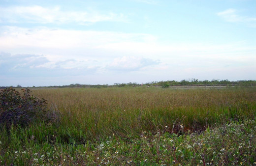 Anhinga Trail in the Everglades National Park