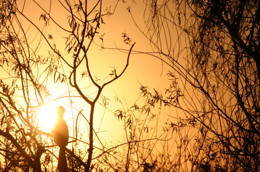 Blue Heron Watches sunset over Shark Valley in the Everglades Marshes