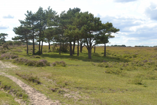 A Walk In The New Forest. Brisk  country walks are ideal for baby boomers