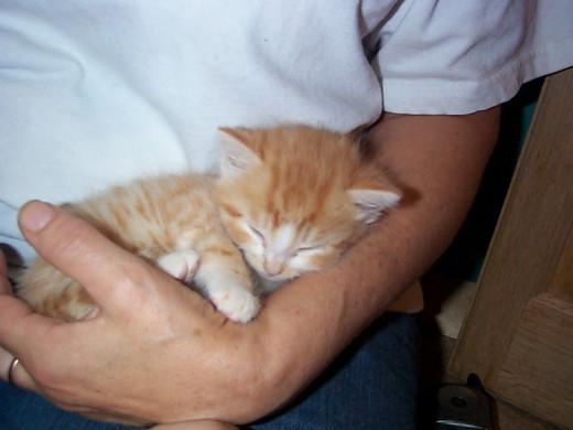 Around 14 days old, Zeke slept alot