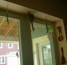 Herbs drying on hooks in my kitchen windowsill ~ mint, oregano, and thyme