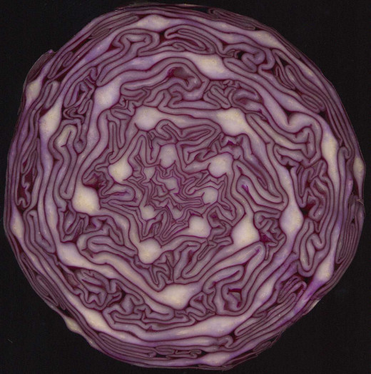 Red Cabbage!