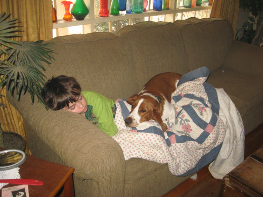 Basset hounds are often among the best dogs for kids.
