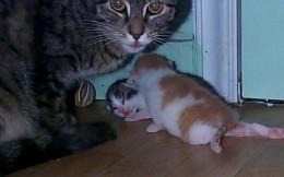 Garbo watching litter carefully during crawling state