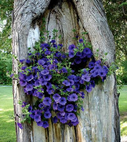 A once ugly, gaping crevice caused by a woodland creature such as a woodpecker can be easily transformed into a beautiful planter for flowers.