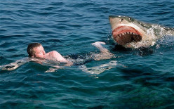 Do you have a fear of Shark Attacks?