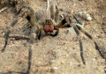 Spiders: Learn about natures insect exterminator