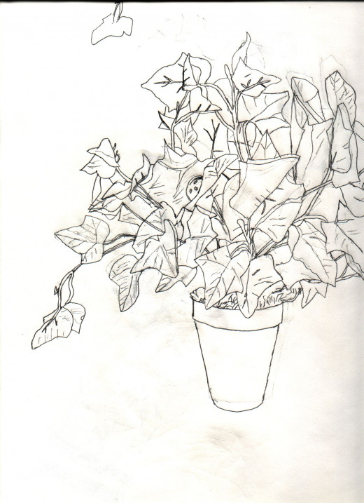 This is a drawing of the potted plant and what it actually looks like.