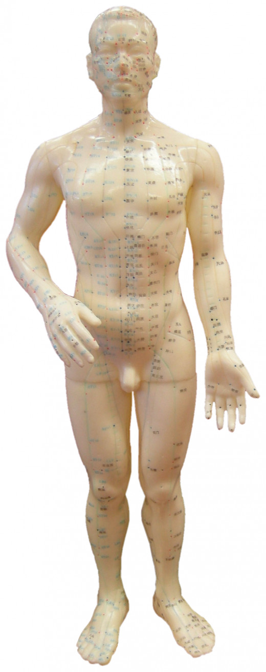 An acupuncture doll showing the meridian lines and acupuncture points on the body.