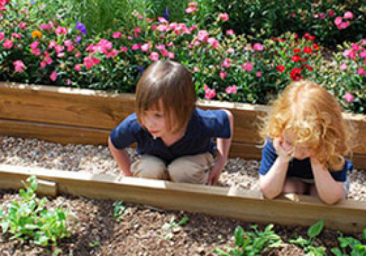 Children learning about gardening at the Bee Cave Montessori school in Austin, Texas