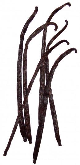 Dried vanilla pods.